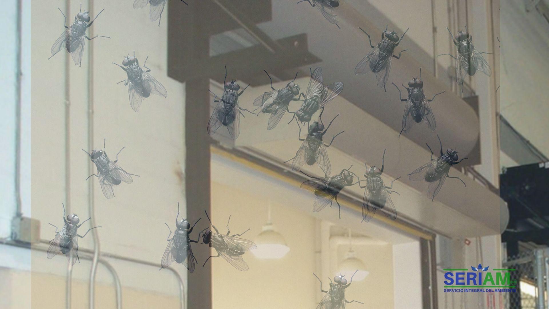 control-insectos-voladores
